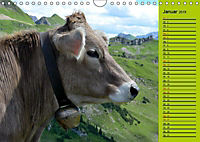 Kuh for you (Wandkalender 2019 DIN A4 quer) - Produktdetailbild 4