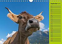 Kuh for you (Wandkalender 2019 DIN A4 quer) - Produktdetailbild 5