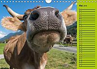 Kuh for you (Wandkalender 2019 DIN A4 quer) - Produktdetailbild 9