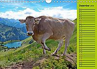 Kuh for you (Wandkalender 2019 DIN A4 quer) - Produktdetailbild 8