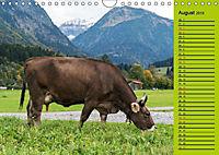 Kuh for you (Wandkalender 2019 DIN A4 quer) - Produktdetailbild 11
