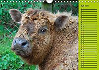 Kuh for you (Wandkalender 2019 DIN A4 quer) - Produktdetailbild 13