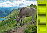 Kuh for you (Wandkalender 2019 DIN A4 quer) - Produktdetailbild 6