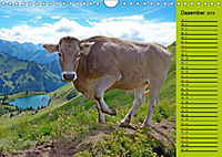 Kuh for you (Wandkalender 2019 DIN A4 quer) - Produktdetailbild 12