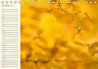 Kunst der Natur (Tischkalender 2019 DIN A5 quer) - Produktdetailbild 10