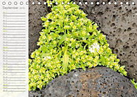 Kunst der Natur (Tischkalender 2019 DIN A5 quer) - Produktdetailbild 9