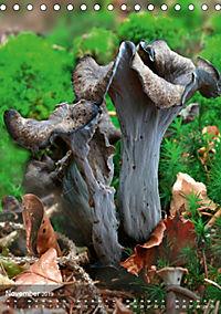 Kuriositäten aus der Welt der Pilze (Tischkalender 2019 DIN A5 hoch) - Produktdetailbild 11