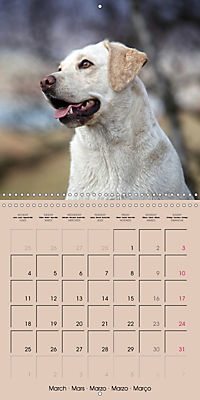 Labrador Retriever - Dogs with Personality (Wall Calendar 2019 300 × 300 mm Square) - Produktdetailbild 3