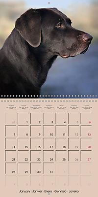 Labrador Retriever - Dogs with Personality (Wall Calendar 2019 300 × 300 mm Square) - Produktdetailbild 1