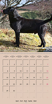 Labrador Retriever - Dogs with Personality (Wall Calendar 2019 300 × 300 mm Square) - Produktdetailbild 4