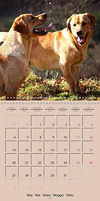 Labrador Retriever - Dogs with Personality (Wall Calendar 2019 300 × 300 mm Square) - Produktdetailbild 5