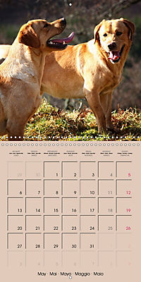 Labrador Retriever - Dogs with Personality (Wall Calendar 2019 300 × 300 mm Square) - Produktdetailbild 5
