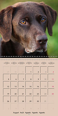 Labrador Retriever - Dogs with Personality (Wall Calendar 2019 300 × 300 mm Square) - Produktdetailbild 8