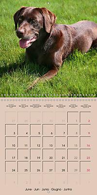 Labrador Retriever - Dogs with Personality (Wall Calendar 2019 300 × 300 mm Square) - Produktdetailbild 6