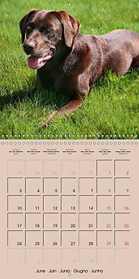 Labrador Retriever - Dogs with Personality (Wall Calendar 2019 300 × 300 mm Square) - Produktdetailbild 6