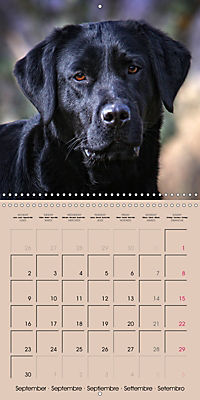 Labrador Retriever - Dogs with Personality (Wall Calendar 2019 300 × 300 mm Square) - Produktdetailbild 9