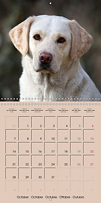 Labrador Retriever - Dogs with Personality (Wall Calendar 2019 300 × 300 mm Square) - Produktdetailbild 10