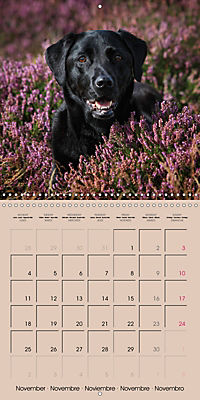 Labrador Retriever - Dogs with Personality (Wall Calendar 2019 300 × 300 mm Square) - Produktdetailbild 11