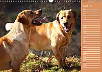 Labrador Retriever - Faithful Companions (Wall Calendar 2019 DIN A3 Landscape) - Produktdetailbild 4