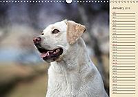 Labrador Retriever - Faithful Companions (Wall Calendar 2019 DIN A3 Landscape) - Produktdetailbild 1