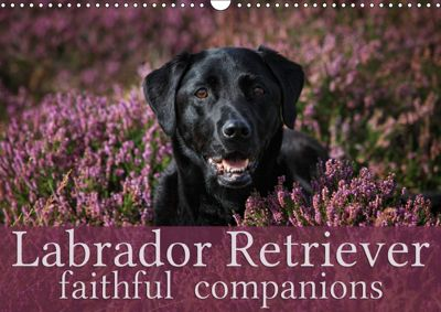 Labrador Retriever - Faithful Companions (Wall Calendar 2019 DIN A3 Landscape), Martina Cross
