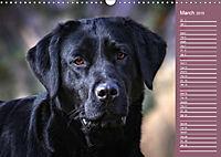 Labrador Retriever - Faithful Companions (Wall Calendar 2019 DIN A3 Landscape) - Produktdetailbild 3