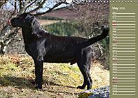 Labrador Retriever - Faithful Companions (Wall Calendar 2019 DIN A3 Landscape) - Produktdetailbild 5