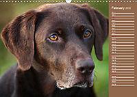 Labrador Retriever - Faithful Companions (Wall Calendar 2019 DIN A3 Landscape) - Produktdetailbild 2