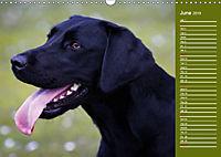 Labrador Retriever - Faithful Companions (Wall Calendar 2019 DIN A3 Landscape) - Produktdetailbild 6