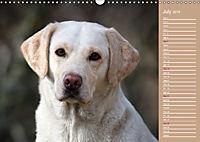 Labrador Retriever - Faithful Companions (Wall Calendar 2019 DIN A3 Landscape) - Produktdetailbild 7