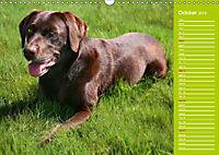 Labrador Retriever - Faithful Companions (Wall Calendar 2019 DIN A3 Landscape) - Produktdetailbild 10