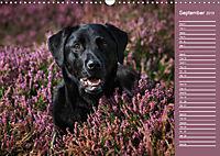 Labrador Retriever - Faithful Companions (Wall Calendar 2019 DIN A3 Landscape) - Produktdetailbild 9