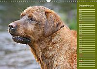 Labrador Retriever - Faithful Companions (Wall Calendar 2019 DIN A3 Landscape) - Produktdetailbild 12