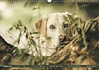 Labrador Trio - 3 Farben, 3 Freunde (Wandkalender 2019 DIN A3 quer) - Produktdetailbild 10