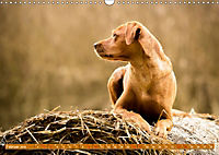 Labrador Trio - 3 Farben, 3 Freunde (Wandkalender 2019 DIN A3 quer) - Produktdetailbild 2
