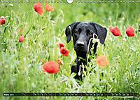 Labrador Trio - 3 Farben, 3 Freunde (Wandkalender 2019 DIN A3 quer) - Produktdetailbild 3