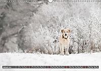 Labrador Trio - 3 Farben, 3 Freunde (Wandkalender 2019 DIN A3 quer) - Produktdetailbild 1