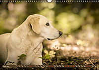 Labrador Trio - 3 Farben, 3 Freunde (Wandkalender 2019 DIN A3 quer) - Produktdetailbild 4
