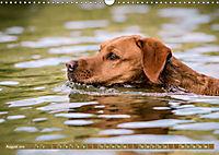 Labrador Trio - 3 Farben, 3 Freunde (Wandkalender 2019 DIN A3 quer) - Produktdetailbild 8