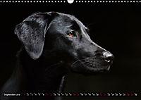 Labrador Trio - 3 Farben, 3 Freunde (Wandkalender 2019 DIN A3 quer) - Produktdetailbild 9