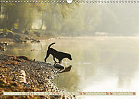 Labrador Trio - 3 Farben, 3 Freunde (Wandkalender 2019 DIN A3 quer) - Produktdetailbild 11