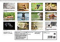 Labrador Trio - 3 Farben, 3 Freunde (Wandkalender 2019 DIN A3 quer) - Produktdetailbild 13