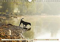 Labrador Trio - 3 Farben, 3 Freunde (Wandkalender 2019 DIN A4 quer) - Produktdetailbild 11