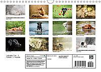 Labrador Trio - 3 Farben, 3 Freunde (Wandkalender 2019 DIN A4 quer) - Produktdetailbild 13