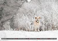 Labrador Trio - 3 Farben, 3 Freunde (Wandkalender 2019 DIN A4 quer) - Produktdetailbild 1