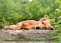 Labrador Trio - 3 Farben, 3 Freunde (Wandkalender 2019 DIN A4 quer) - Produktdetailbild 5