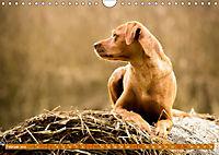 Labrador Trio - 3 Farben, 3 Freunde (Wandkalender 2019 DIN A4 quer) - Produktdetailbild 2