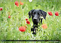 Labrador Trio - 3 Farben, 3 Freunde (Wandkalender 2019 DIN A4 quer) - Produktdetailbild 3