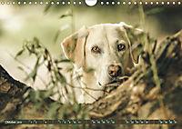 Labrador Trio - 3 Farben, 3 Freunde (Wandkalender 2019 DIN A4 quer) - Produktdetailbild 10