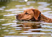 Labrador Trio - 3 Farben, 3 Freunde (Wandkalender 2019 DIN A4 quer) - Produktdetailbild 8